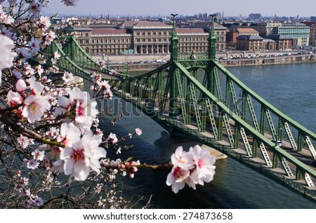 Liberty Bridge in Budapest with natural blossom frame - Hungary - stock photo