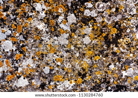 Lichens growing on ancient stone