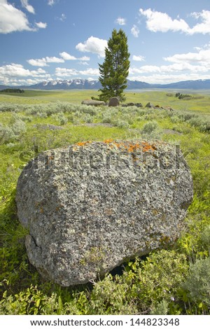 Lichens growing on rocks in Centennial Valley near Lakeview, MT - stock photo
