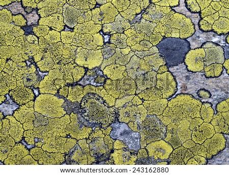 Lichens on stone texture, closeup - stock photo