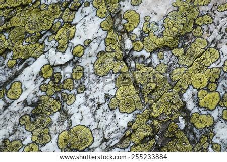 Lichens on stone texture, macro - stock photo