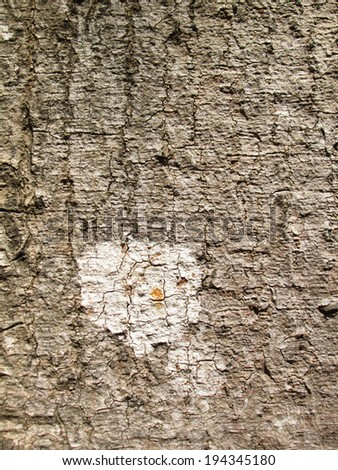 Lichens on tree bark - stock photo