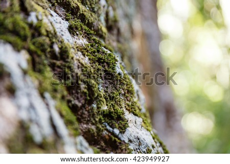 Lichens that  Growing on The Tree