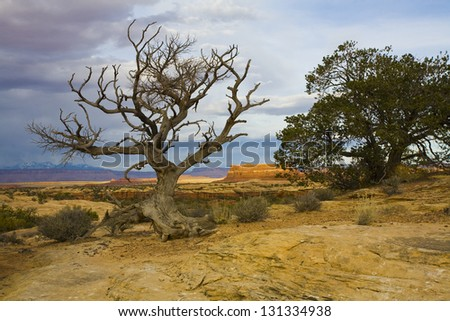 Life and Death. A recently deceased tree shares a view with its thriving neighbor in the desert of southern Utah.