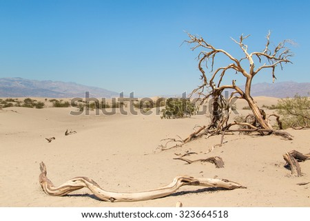 Life dies in the death valley, in america, fine sand and end with the sweltering heat with only scrub vegetation  - stock photo