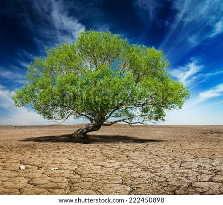 Life ecology solitude concept - lonely green tree on cracked earth - stock photo