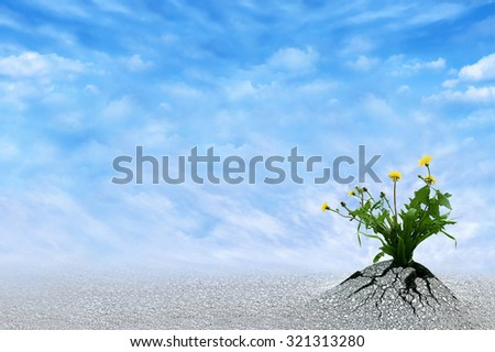 Life Persists. Inspirational and conceptual image for hope, winning, never give up, struggle, persistence, motivation etc. Copy space for presentation text. - stock photo