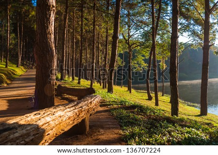 Light aircraft, Pang Ung Forestry Plantations, Maehongson Province, North of Thailand - stock photo