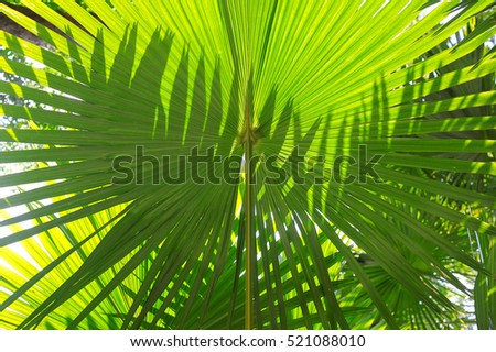 Light and shadow of palm leaves, green leaves texture, abstract nature background, green background