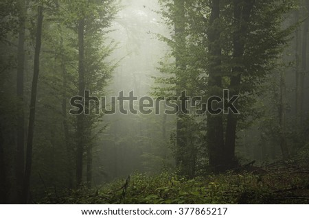 light beam in green misty forest