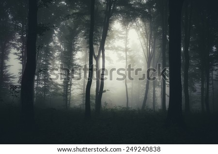 light beam in misty dark forest - stock photo