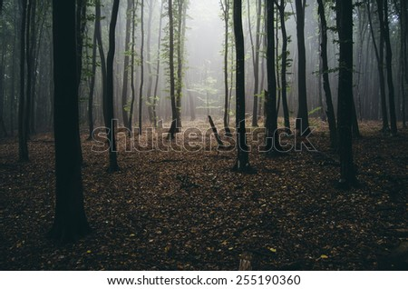 light beam in misty forest - stock photo