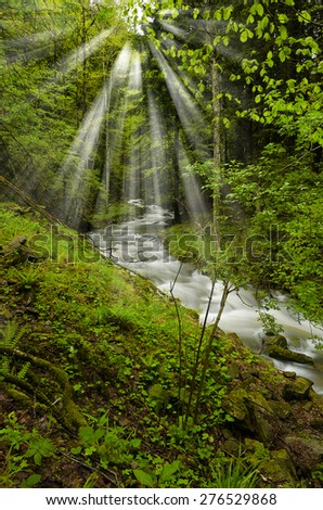 light beam over the stream in the forest - stock photo