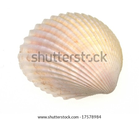 Light Beige Sea Shell Isolated Over White With Copy Space