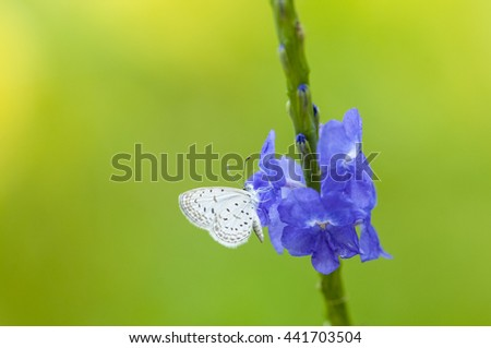 Light blue flowers with a beautiful butterfly. - stock photo