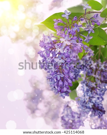 light blue lilac flowers on bright background