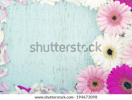 Light blue wooden vintage background with copy space framed with pink gerbera flowers - stock photo