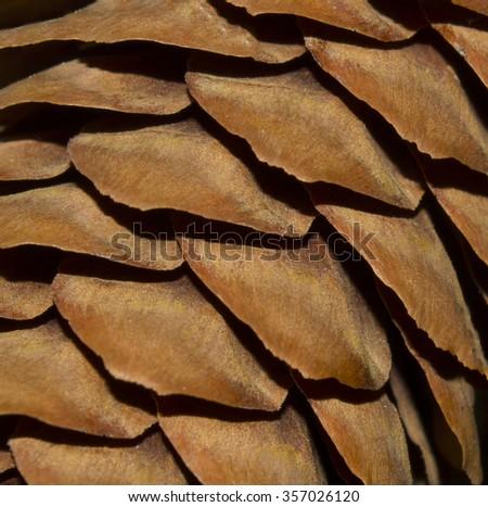 Light brown texture with fir cones. Pinecone macro photography. Closeup - stock photo