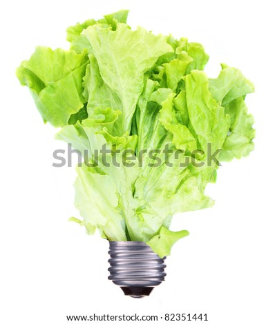 Light bulb and green lettuce growing isolated on white - stock photo
