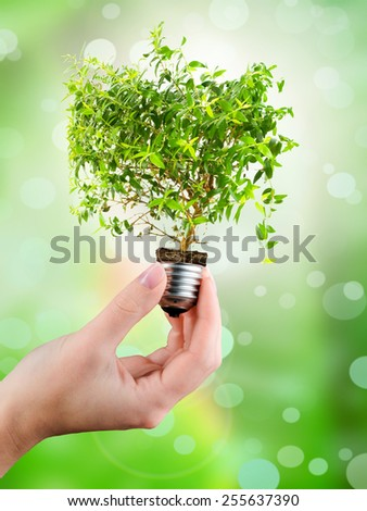 Light bulb in a hand (green tree growing out of a bulb) - stock photo