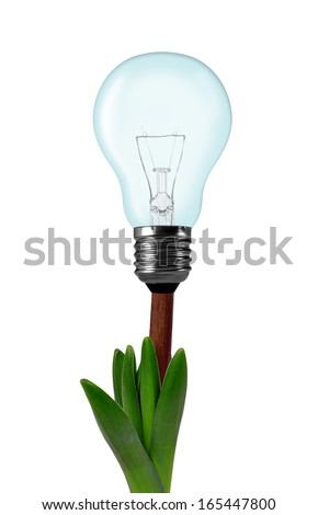 Light bulb on plant isolated on white - green energy concept  - stock photo