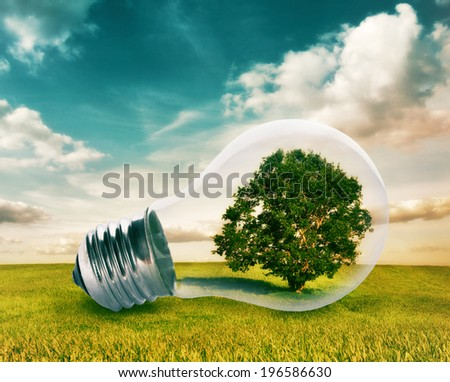 Light bulb with a tree growing inside in green field. Environment, eco technology and energy concept. - stock photo