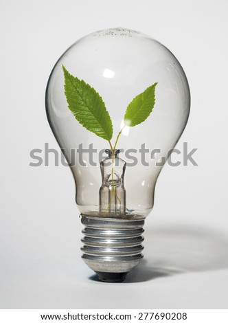 Light bulb with green leaves inside on white background