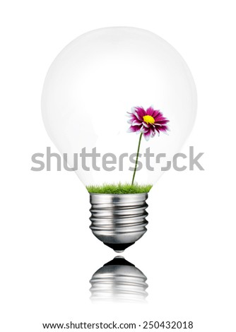 Light Bulb with Little Purple Wildflower Growing Inside Isolated on White Background. Light bulb has a reflection - stock photo