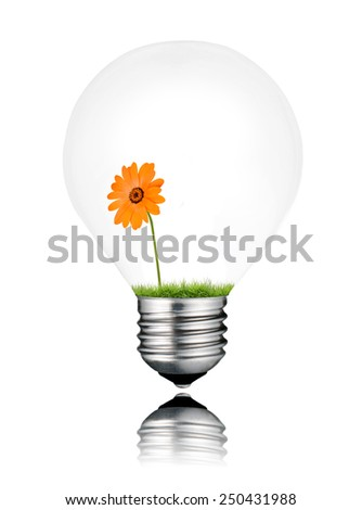 Light Bulb with Orange Daisy Flower Growing Inside Isolated on White Background. Light bulb has a reflection - stock photo