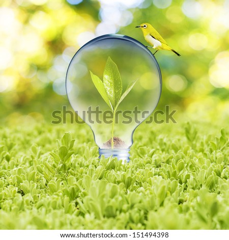 Light bulb with plant growing inside on green grass and bird. Concept of Eco technology - stock photo