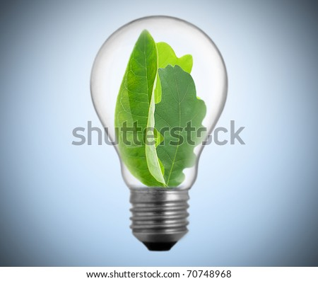 light bulb with plant inside