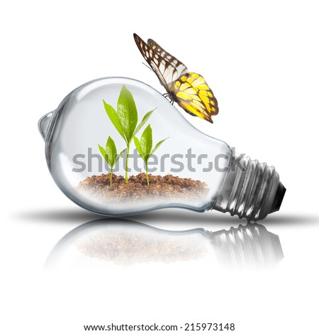 Light bulb with plant inside and butterfly on top