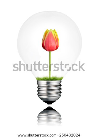 Light Bulb with Red Tulip Flower Growing Inside Isolated on White Background. Light bulb has a reflection - stock photo