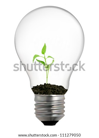light bulb with seed inside