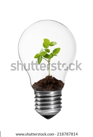 Light bulb with small green plant inside. - stock photo