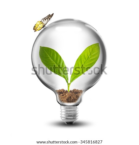 Light Bulb with soil and green plant sprout inside and butterfly. Eco Concept