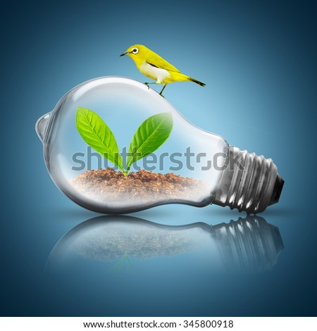 Light Bulb with soil and green plant sprout inside. Eco Concept