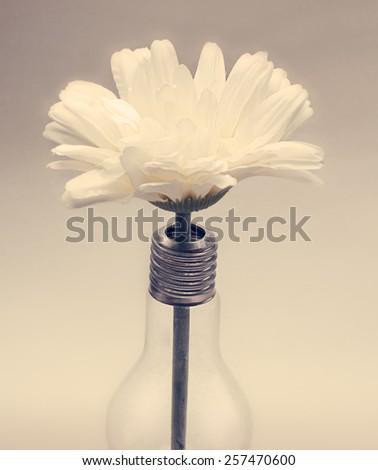 light bulb with  white flower inside - stock photo