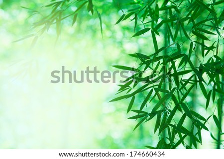 Light coming through a bamboo forest.  - stock photo