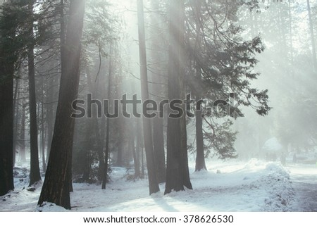 Light coming through the trees in Yosemite National Park