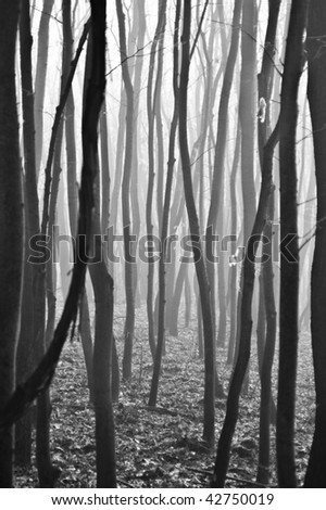 Light entering autumnal deciduous forest - stock photo