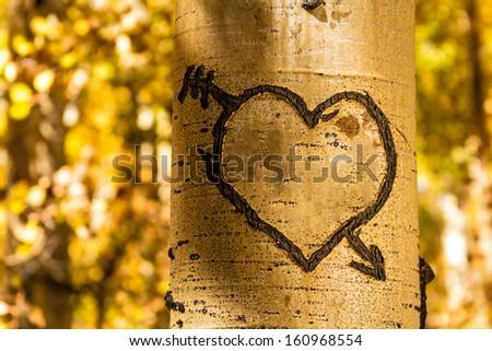 Light glowing on carved heart in Aspen tree trunk - stock photo