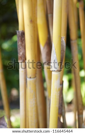 Light Golden bamboo Background - stock photo