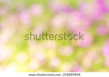 Light green and pink background beautiful bokeh - stock photo