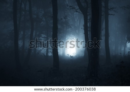 light in a dark forest at night - stock photo