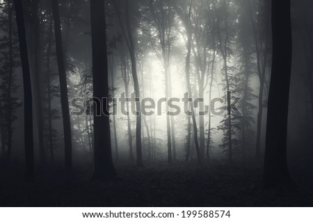 light in a foggy forest - stock photo