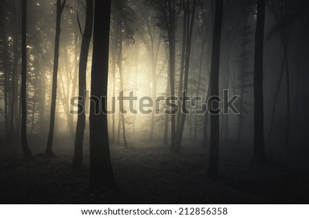 light in dark eerie forest - stock photo