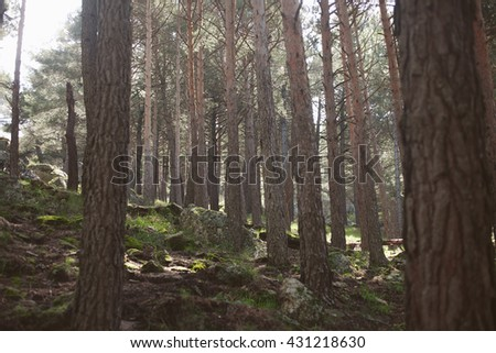 Light in the forest, spring mountain landscape,