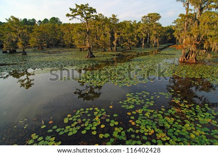 Light of setting sun on An open path of water through lily pads and cypress trees on Caddo Lake on border of  Louisiana and Texas. - stock photo