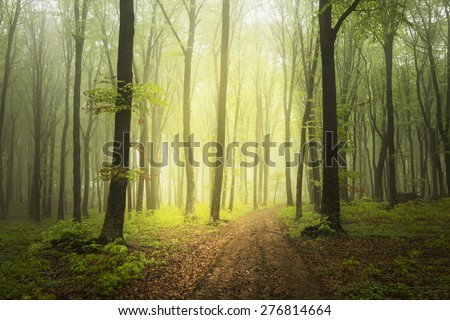 Light on the path of a foggy forest in a rainy spring day